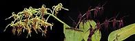 Defend and Protect összetett orchidea eszencia