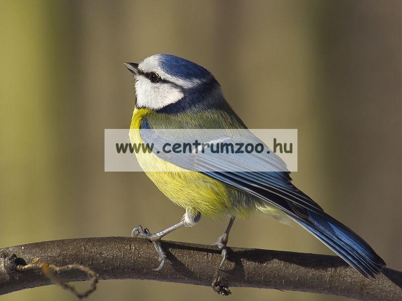 Ferplast Natura Outside Nest fa madárodú kertbe N2 WHITE (92113011)