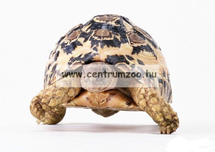 JBL Agivert szárazföldi teknős eleség 1000ml (JBL70333) NEW